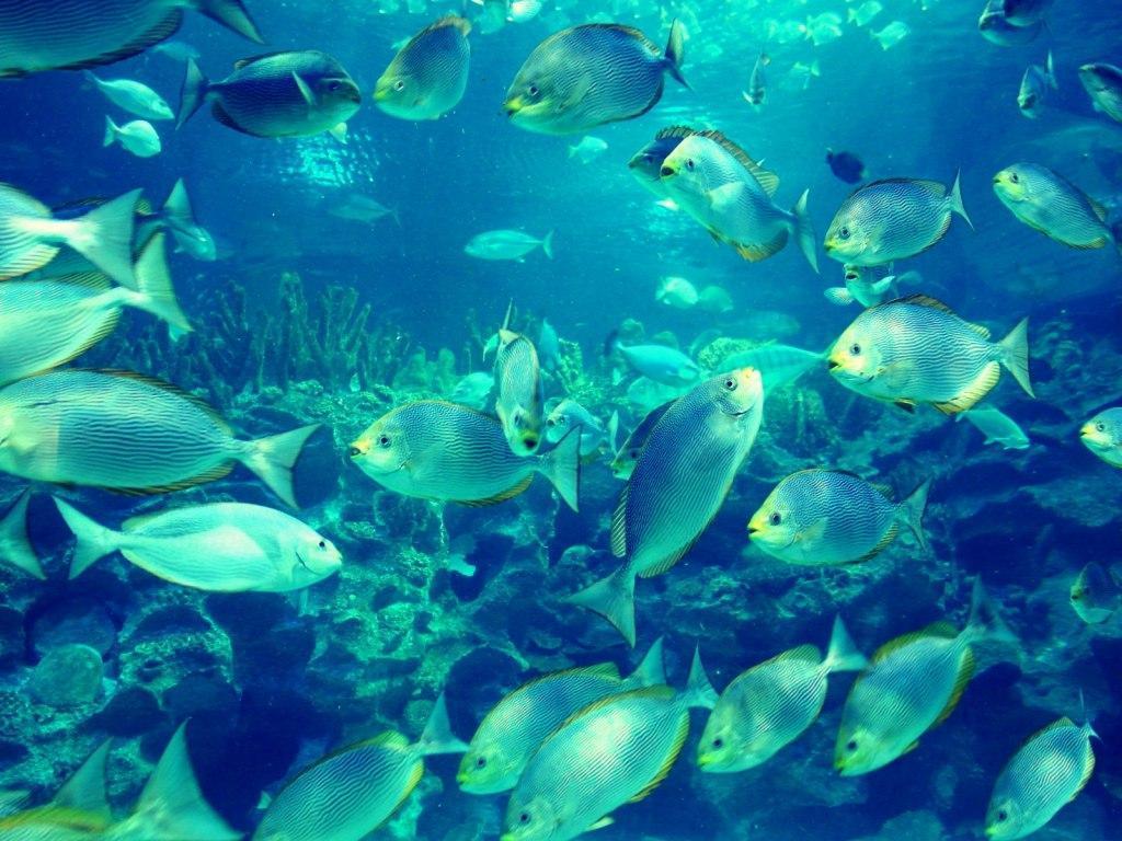 آشنایی با آکواریوم کوالالامپور (Aquaria KLCC)