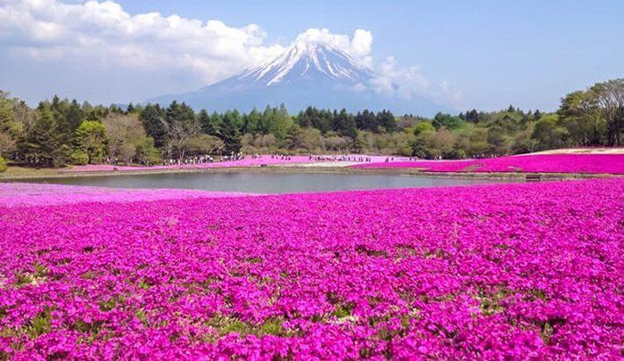 بیا بریم دشت&hellip کدوم دشت؟، از ایتالیا تا فرانسه و نیوزلند و ژاپن! ، تصاویر