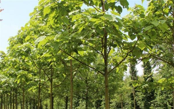 رییس سازمان جنگل ها: در برابر قطع یک درخت مسئول هستیم