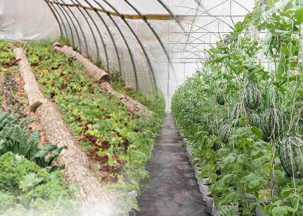 چه روش هایی برای گرمایش گلخانه مقرون به صرفه تر و مناسب تر می باشد؟